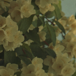 KodakPortra400VC_120